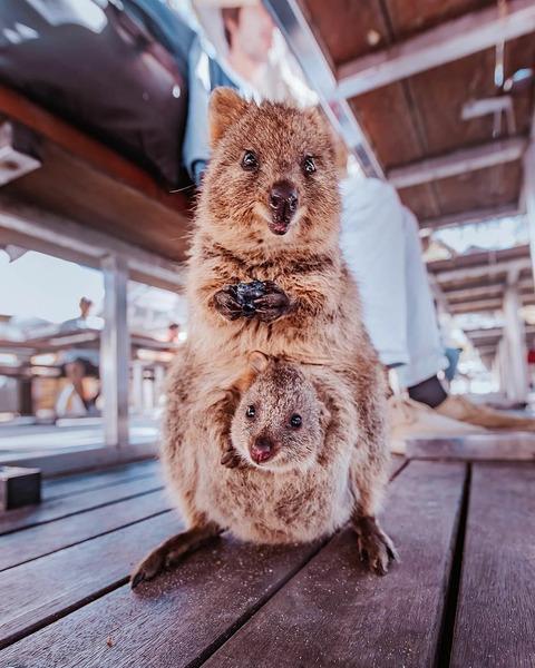 фото из Австралии