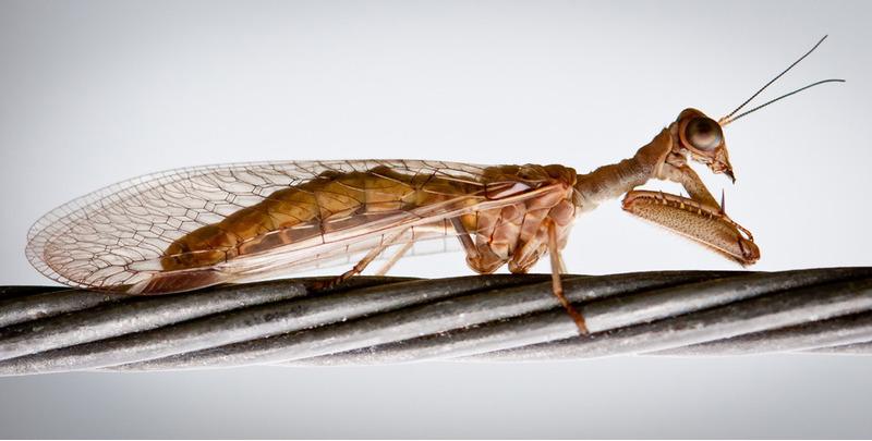 Неизвестный жук