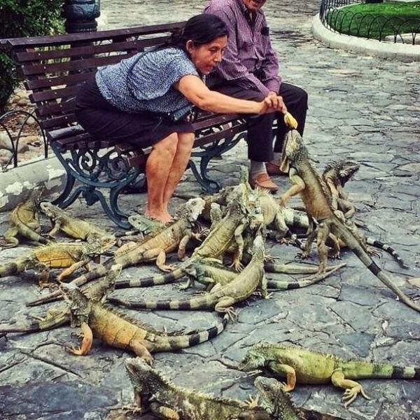 Кормление «птичек» в Эквадоре.