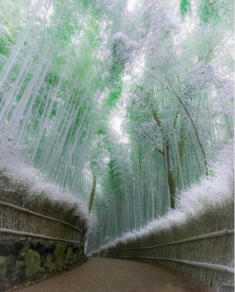 Бамбуковый лес. Япония, Арасияма