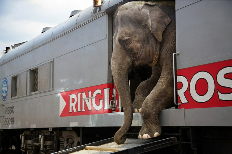 Из проекта Убегая вместе с цирком, Стэфани Синклэр, США.