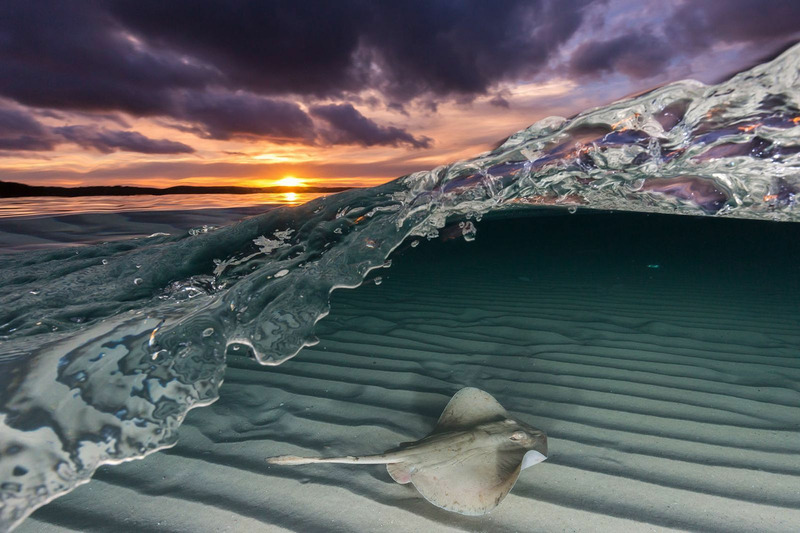 Фотографу удалось запечатлеть ската на берегу Джервис-Бей в Австралии, получился интересный кадр.