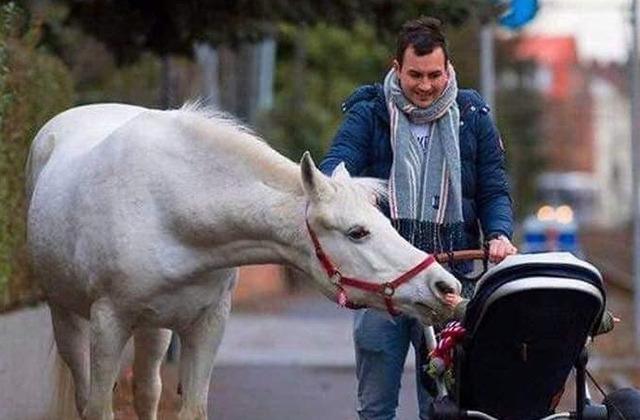 лошадь Дженни