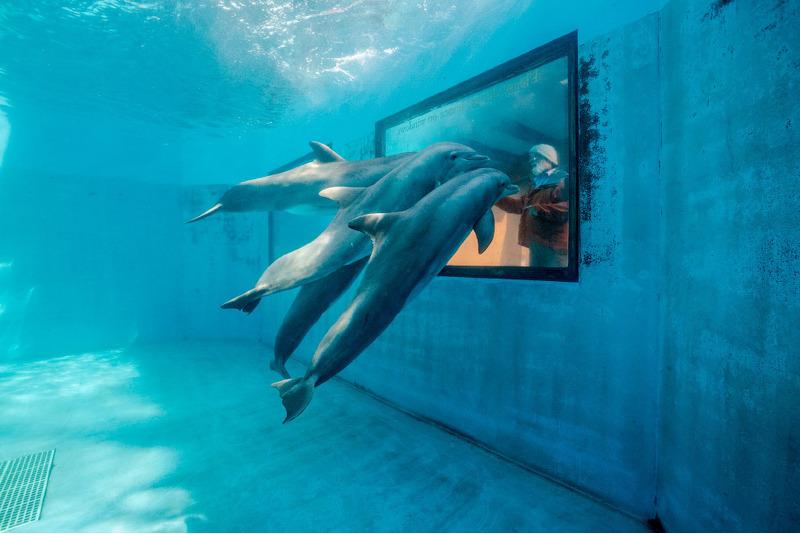 Дельфины, штат Калифорния.