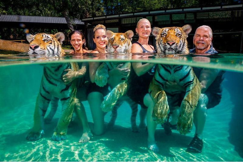 С тигрятами в бассейне.