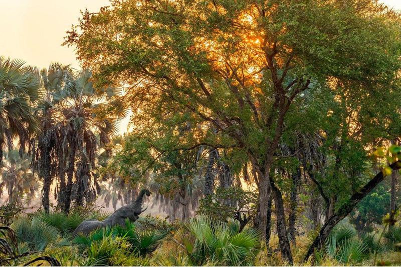 Слон в Национальном парке Горонгоса расположен в южной части Восточно-Африканской рифтовой долины.