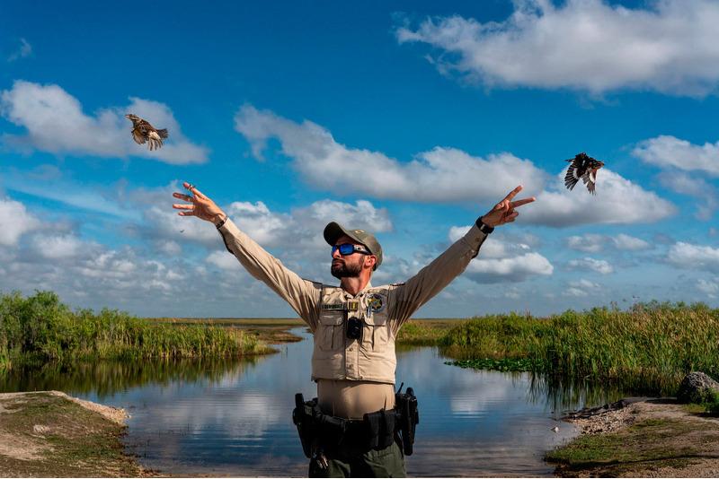 Выпуск в дикую природу конфискованных у контрабандистов певчих птиц.