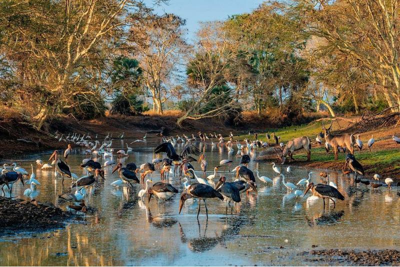 Национальный парк Горонгоса и птицы.