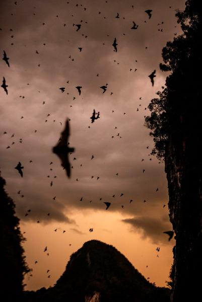 В оленьей пещере Борнео обитают более двух миллионов летучих мышей.