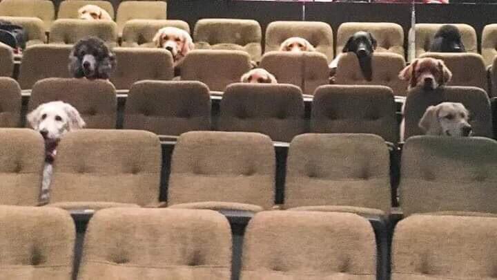 собаки-поводыри в театре