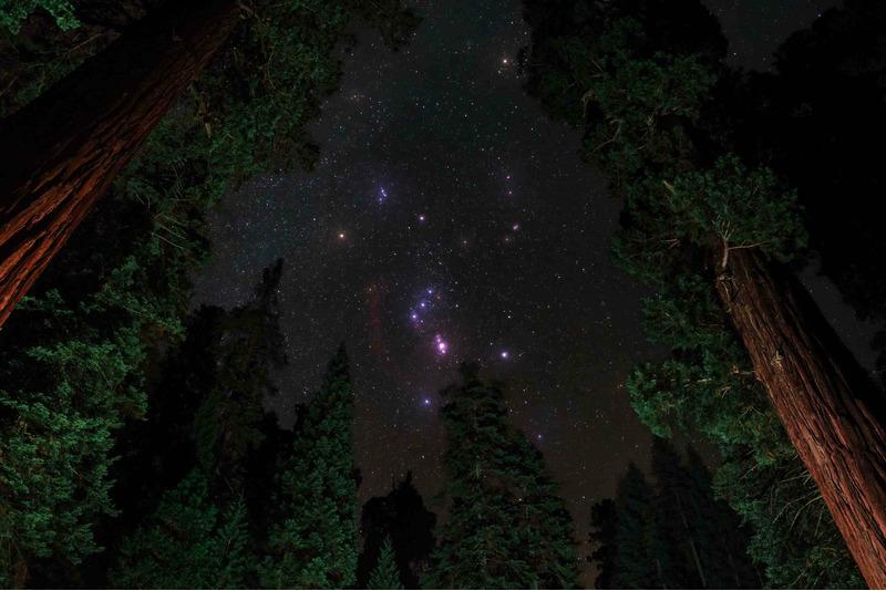 Созвездие Ориона над Национальным парком Секвойя