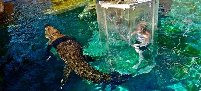 Крокодилья бухта