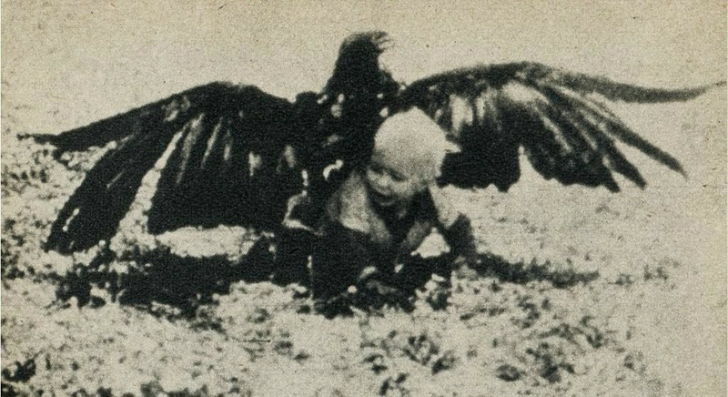 Орел утащил ребенка