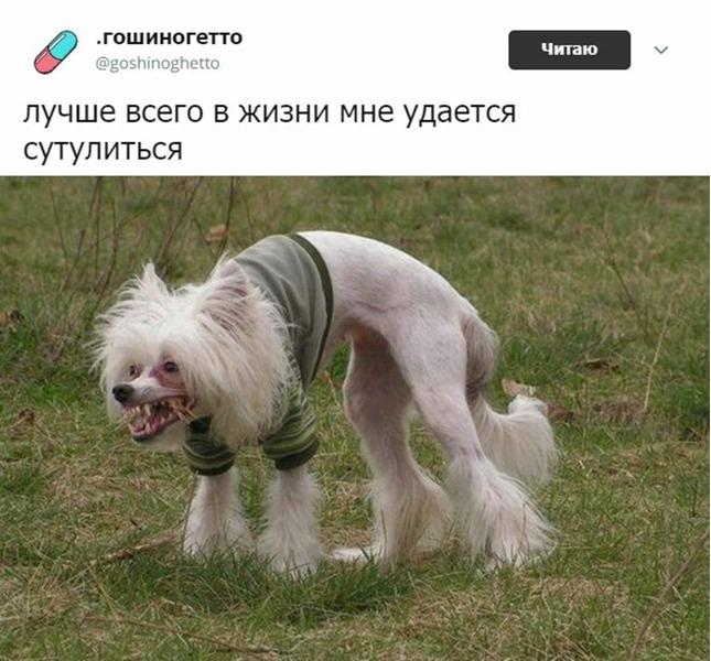 Сoбака сутулая