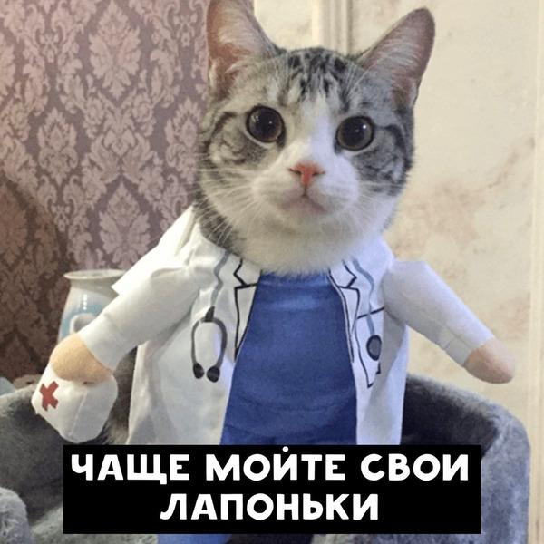 Советы от котиков