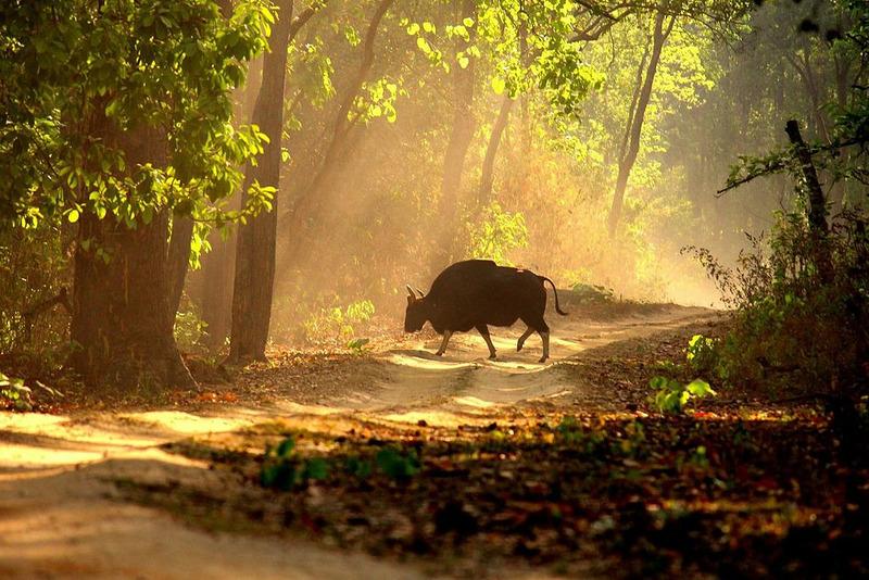 Национальный парк Канха (Kanha National Park)