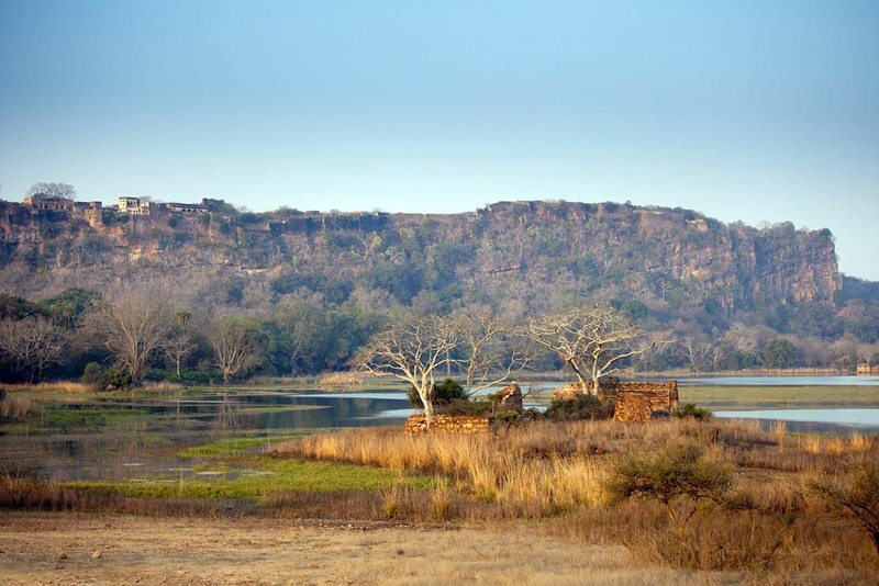 Национальный парк Рантхамбор или Рантамбор
