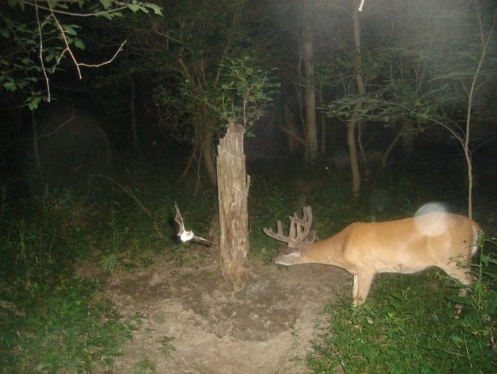рыбу странные фото с камер ловушек в лесу пол настелить