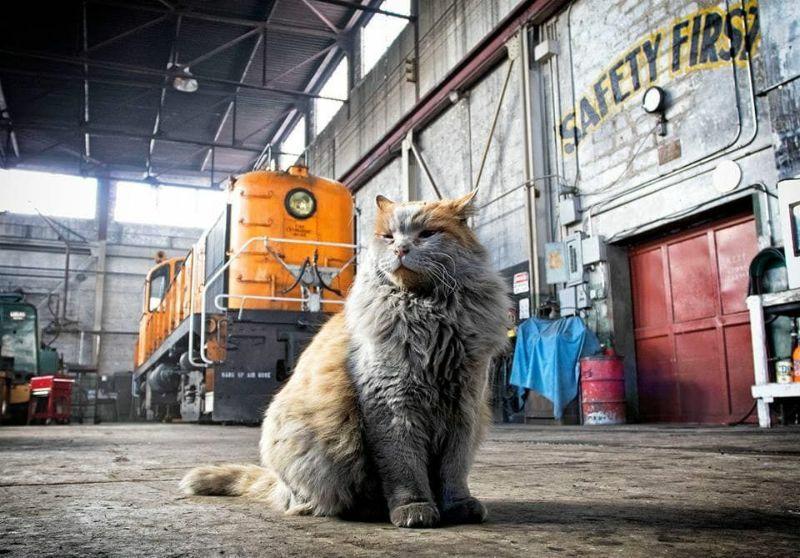 Кошка по кличке Грязь