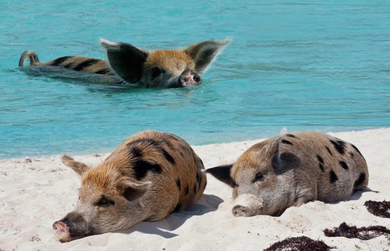 Открытка, прикольные картинки животных на пляже