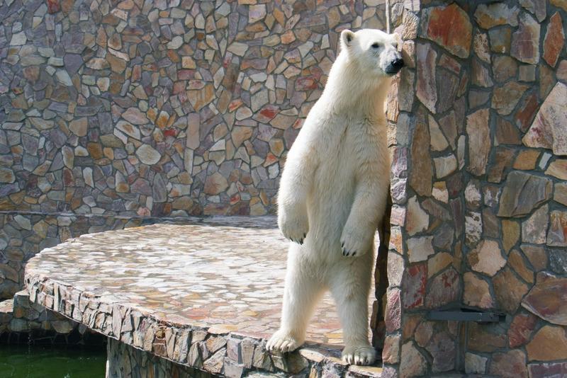 Ленинградский зоопарк о посетителях
