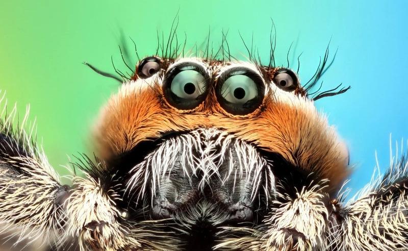 Красивые пауки