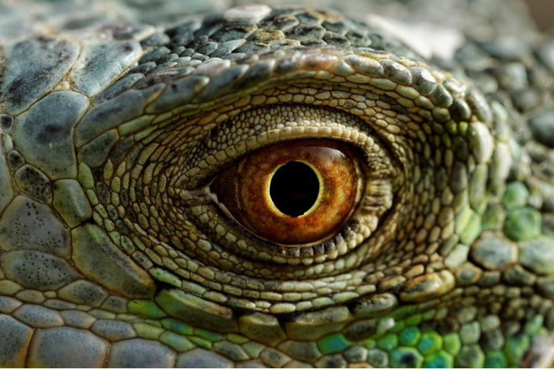 Когда у животных появились глаза