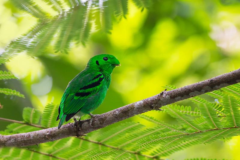 картинка на темно-зеленом фоне маленькая птица