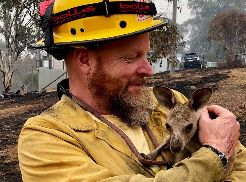 Кенгуру которого спасли от лесного пожара