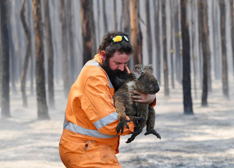 Спасатель несет коалу из горящего леса