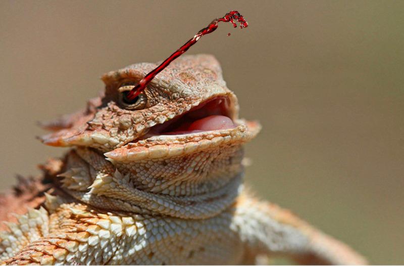 Жабовидная ящерица стреляет во врага кровью из глаз