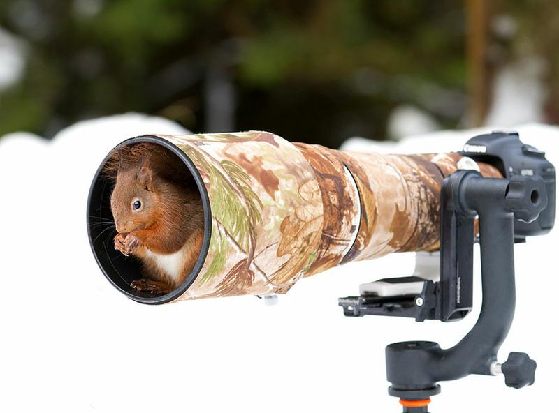 Животные мешают фотографам