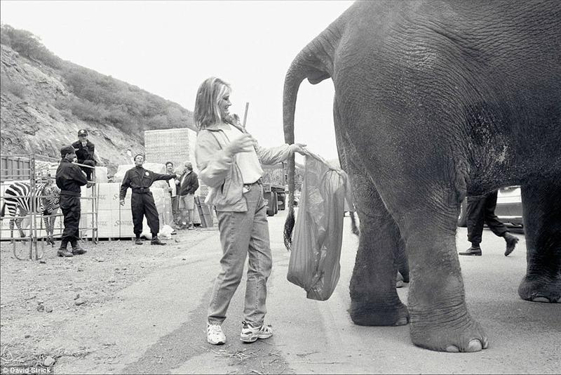 Дрессировщица слонов выполняет не очень гламурную работу — собирает навоз за животным во время съемки фильма О, где же ты, брат? в 1998 году.