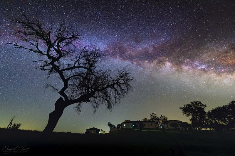 Млечный путь и оливковое дерево