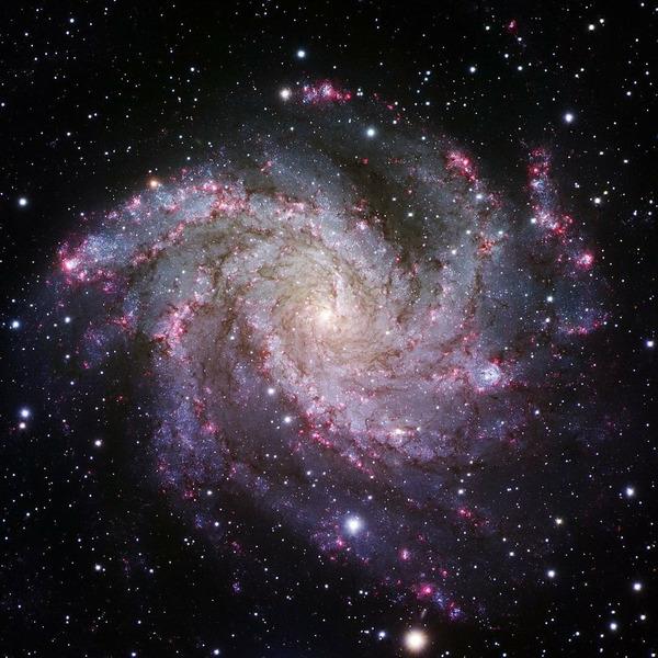 Спиральная галактика Фейерверк (NGC 6946) в созвездии Лебедя