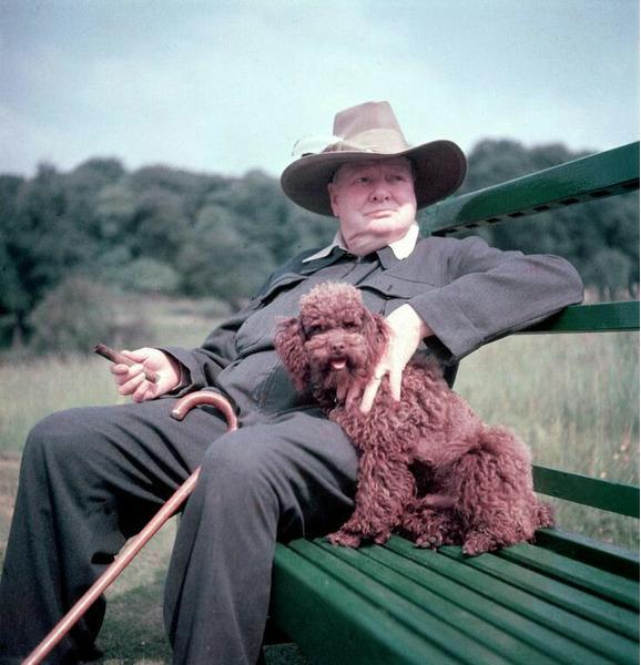 Любимая собака Уинстона Черчилля - пудель Руфус.