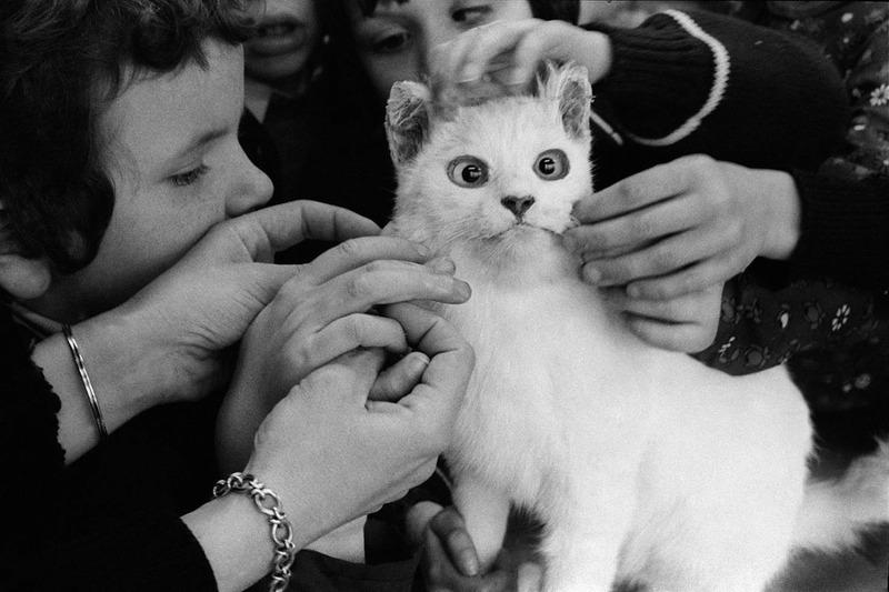 Слепые дети изучают кошку, фотограф Джейн Этвуд, 1981 г.