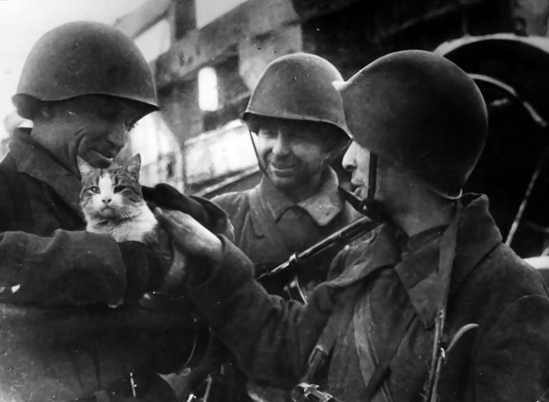 Советские бойцы с кошкой на руках в Сталинграде. 1942 год.