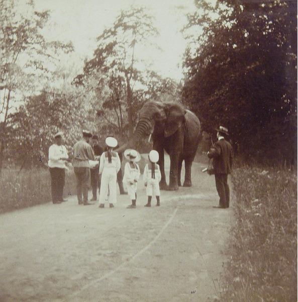 Император Николай II выгуливает слона