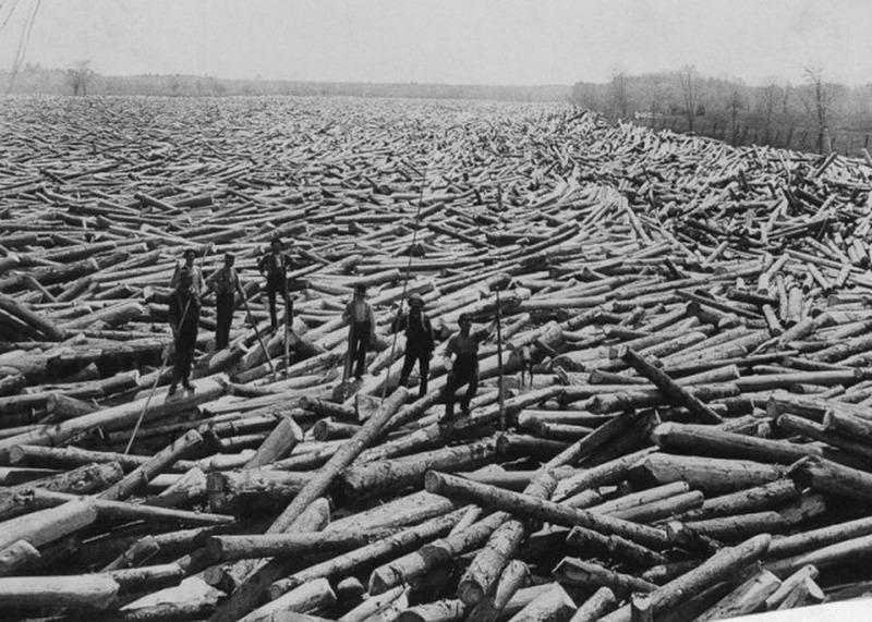 Лесорубы среди подготовленных к сплаву бревен, штат Нью-Йорк, 1919 год.