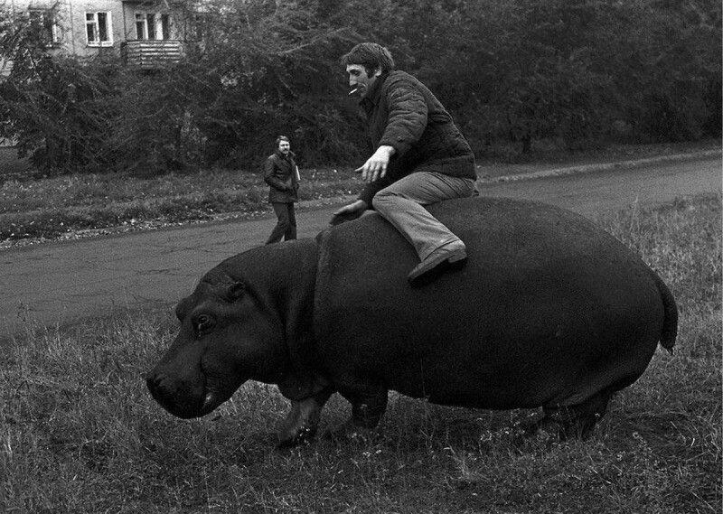 Поддатый мужчина верхом на гиппопотаме, Новокузнецк, СССР, 1982 год