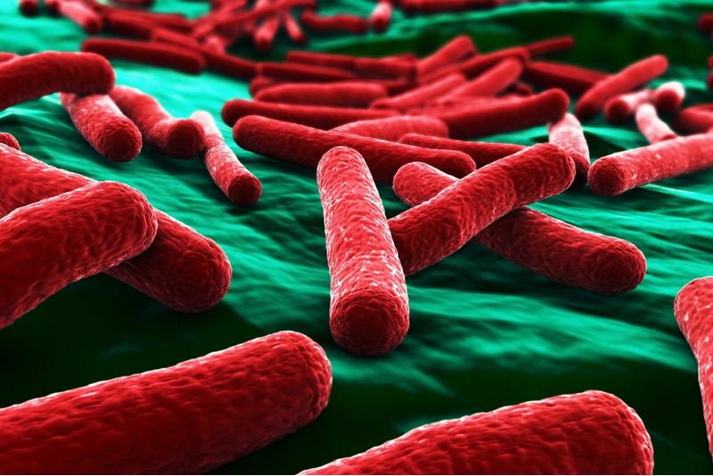 ДНК кишечной палочки (Escherichia coli)