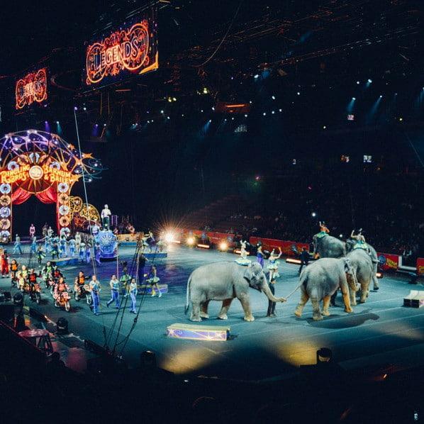 Правительство Украины намерено отказаться от цирка с животными