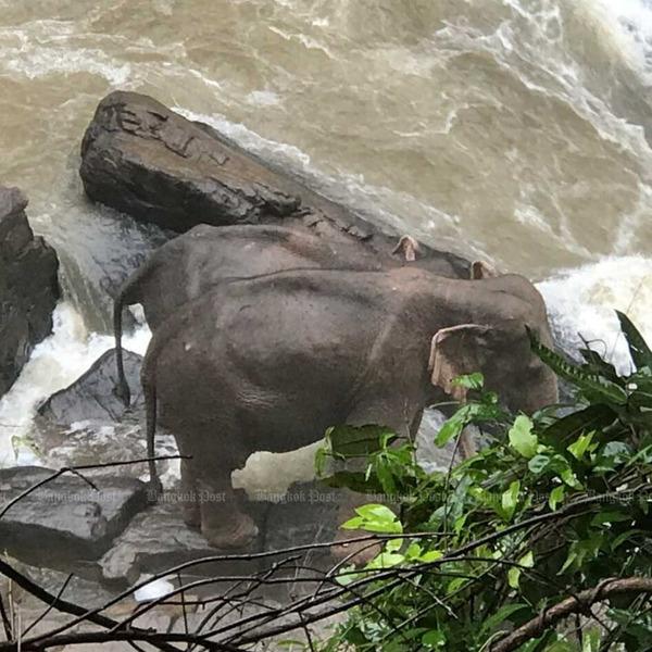 Пять слонов погибли в национальном парке Таиланда, пытаясь спасти упавшего в водопад слонёнка