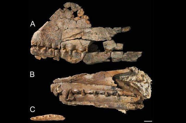 В Австралии найдены останки птерозавра