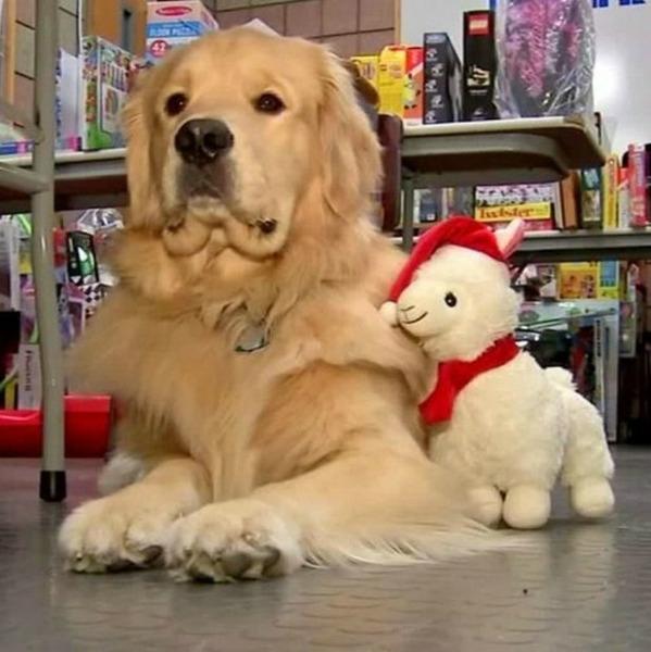 В США служебный пёс похищал рождественские игрушки