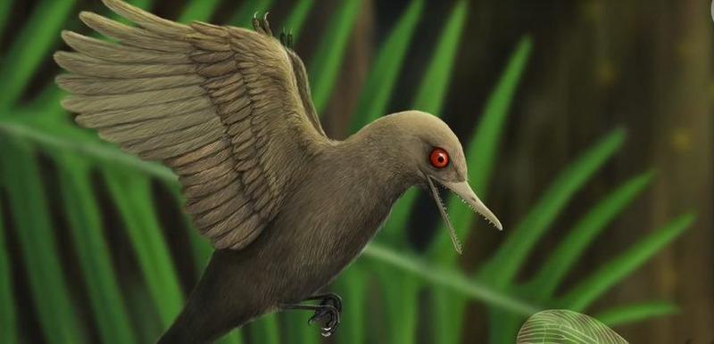 Oculudentavis khaungraae (глазастая и зубастая птица)