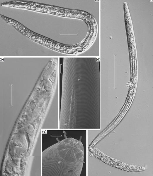 Российские ученые разморозили доисторических червей