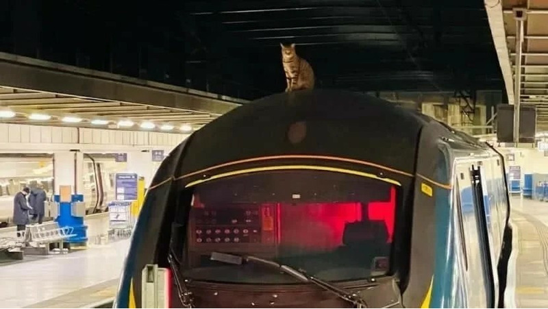 кошка на крыше поезда