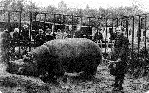 Бегемотиха пережившая блокаду Ленинграда